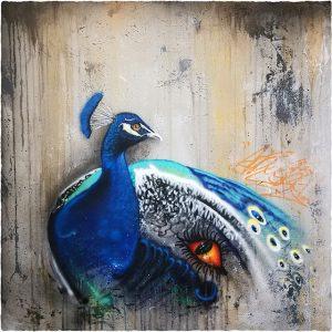 Peacoc